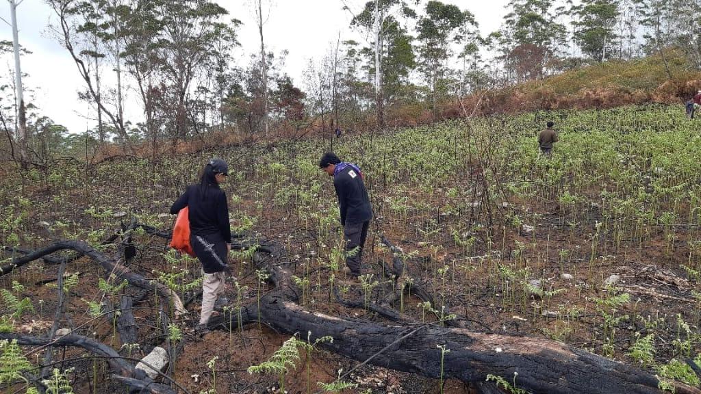 FT Unibos  Tanam 1000 Pohon di Malino